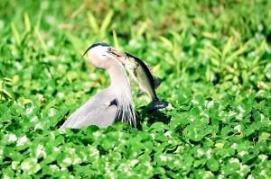 Roland and Mary Ann Martins Marina Lake Okeechobee Birding